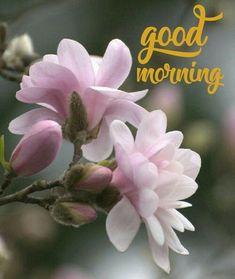 Good Morning Beautiful Flowers, Good Morning Nature, Good Morning Images Flowers, Good Morning Beautiful Quotes, Good Morning Handsome, Morning Pictures, Hindi Good Morning Quotes, Morning Pics, Good Morning Inspirational Quotes