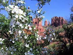 Cathedral Rock in Sedona, Arizona by Kelli Klymenko