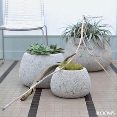 Wohndeko: Grau-grüne Zimmerpflanzen beleben Interieur