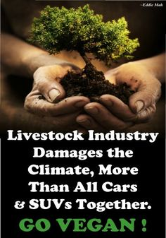 Livestock Industry damages the climate, more than all Cars & SUV's together    Another reason to go vegan... July  2013
