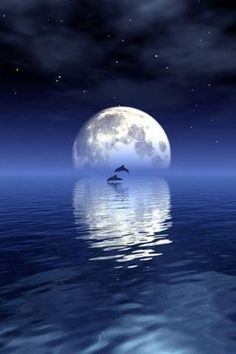 Dolphins night swim...