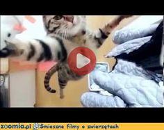 Koci skok « Koty « Śmieszne filmy o zwierzętach - śmieszne koty, śmieszne psy. Zoomia.pl :: Zoomia pl