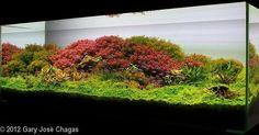 Beautiful planted tank ------------------------------------------------ #aquascape #aquarium #aqua #aquascaping #wood #grass #tetra #fish #fishtank #tropical #tropicalfish #nature #scenery #water #fresh #aquariumsofinstagram #aquaria #beautiful #awesome #plants #aquariums #instafish #naturalaquariums #beautiful #aquariumsdaily