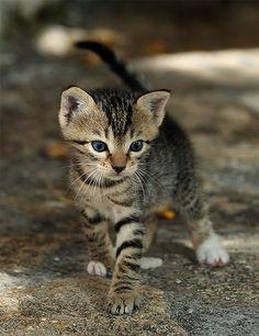 Wigglin' (Feral / Stray kitten) by Roeselien Raimond, via Flickr