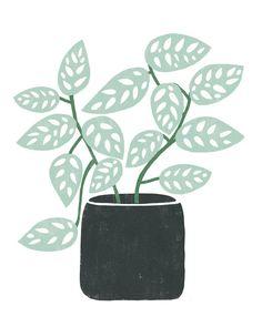 Plant Painting, Plant Drawing, Plant Art, Summer Plants, Fall Plants, Tropical Plants, Desert Plants, Monstera Obliqua, Plant Aesthetic