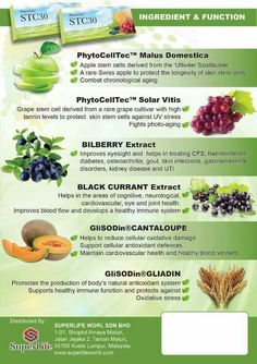 Plant Stem, Plant Cell, Biochemistry, Stem Cells, A Food, Nutrition, Plants, Total Body, Inspirational