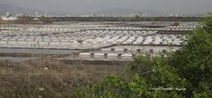 Mumbai daily: Salt pans