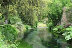 Gardens of Ninfa in Italy | Swans frequent the fast-moving stream and waterfall adjacent to the garden.