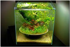 , Aquascape Aquariums, Aquascaping Google, Aquarium Aquascapes, Tank ...