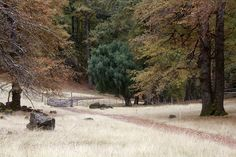 Cinco dias perfeitos na Villa La Angostura na Patagônia argentina