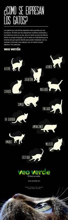 Como se expresan los gatos? [Infografia]                              …