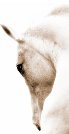 Thom Filicia Horse Print | Western Art | Farmhouse Decor