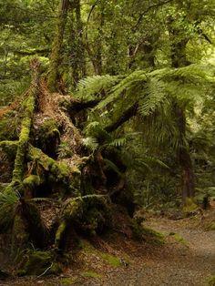 Waikaremoana... New Zealand