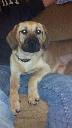 Hi my name is Jessie. I'm available for adoption through POET animal rescue. We're on facebook! www.facebook.com/POETAnimalRescue