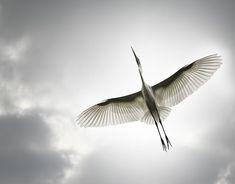Sandy Powers | Bird- From Below