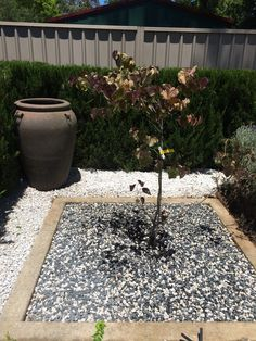 New tree, irrigation, rock pebbles for mulch.