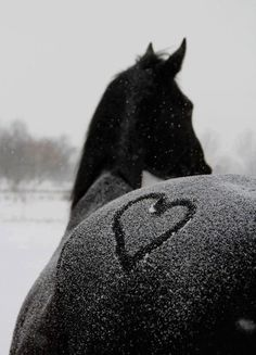 Winter horse hee hee