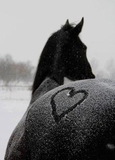 Winter horse hee hee