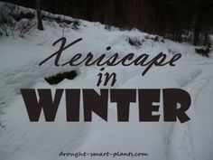 Jan 15, The Xeriscape in Winter; the beauty is just beginning...: Stark and limned in frost or snow… #PlantsandGardening #retainingwall