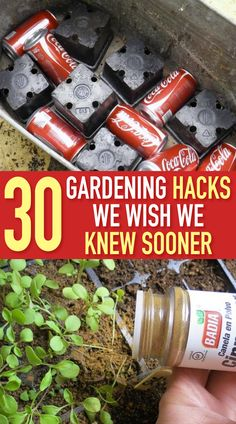 20 Gardening Hacks Using Household Items You Probably Already Own Kew Gardens, Outdoor Gardens, Raised Gardens, Shade Garden, Garden Plants, Organic Gardening, Gardening Tips, Organic Farming, Vegetable Gardening