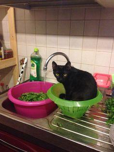 Zelda in cucina