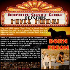 Movie Monday - Born Freon - Born Free ll Air Conditioning A/C / Auto Repair -ll Car / Truck / Auto Repair - Automotive Service Garage - Sarasota, FL http://www.srqautorepair.com/