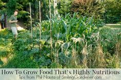 How To Grow Food That's Highly Nutritious (And Has Fewer Pests) Includes frugal ways to make your own fertilizer.