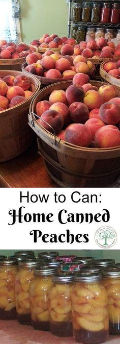 Learn how to can peaches at home for a tasty, nutritious treat all year long! The Homesteading Hippy via @homesteadhippy