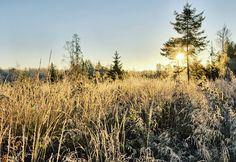 Very cold morning at meadow - Background image with frozen straws on the meadow in winter. #teemutretjakov #fineart #landscapes #finnishnature #naturelovers #natureaddicts #allwhatsbeautiful  #yleluonto #suomenluonto #thebestoffinland #luontoonfi #uusiluontokuva #suomenluontokuvaajat