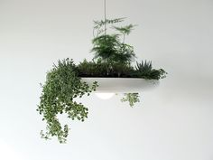 No outdoor space at all? Take to the ceiling with your plants