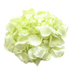 We are suppliers of biodegradable preserved rose petals which are perfect for using as part of your wedding decor or they can be used as your wedding confetti. The petals are biodegradable and they are widely accepted at most wedding venues. Rose Petal Aisle, Rose Petals, Sage Wedding, Spring Wedding, Green Wedding, Green Rose, Mint Green, Confetti Cones, Wedding Aisle Decorations