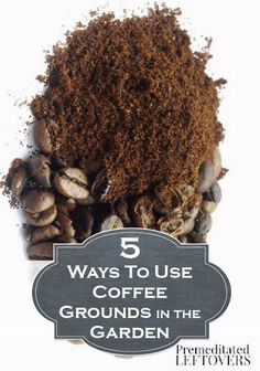 Used coffee grounds can be your best friend in the garden – find out 5 tips on how to use them!