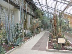 Invernadero santiago castroviejo bolibar zona tropical - Jardin de cactus madrid ...