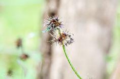 http://jschillingphoto.de/ flower