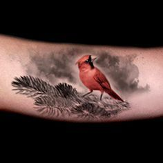 Realistic Red Cardinal Tattoo Done By Brandon Marques Timeless Tattoo Studio T Brandon Cardinal Red Cardinal Tattoos Cardinal Tattoos Timeless Tattoo