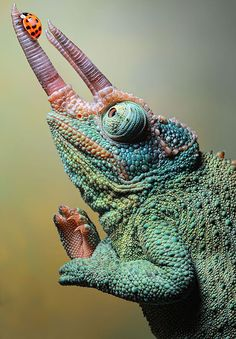 Beautiful.  Amazing bugs, reptiles and amphibians photographed by Igor Siwanowicz.