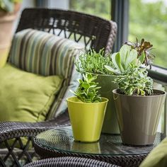 Houseplants are dormant too this time of year so remember to decrease the amount of water you provide. #mossmountainfarm #garden #houseplants #sharethebounty #crescentgarden #planter #gardenhomes