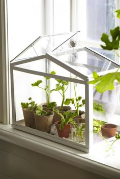 Add this IKEA greenhouse to your windowsill to display your indoor plants STAT.