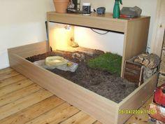 Russian Tortoise Table idea for my future Russian tortoise Tortellini
