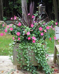 Pink Rio Dipladenias in a deck planter with Red Star Spike centre for height Plants For Planters, Flower Planters, Garden Planters, Flower Pots, Planter Pots, Outdoor Flowers, Outdoor Plants, Container Flowers, Container Plants