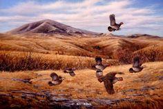 Bear Paw Mountain - Hungarian Partridge by Jim Killen
