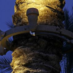 Roto-Lite's palm light ring wraps around the tree and allows for light fixtures on each ring. Any light ficture with a NPT will fit on ring. Palm Tree Lights, Tree Lighting, Outdoor Lighting, Palm Trees, Lighting Concepts, Tree Rings, Krabi, Light Design, Backyard Projects