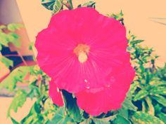 I bei fiori sono fatti per essere condivisi con le persone a cui teniamo! <3