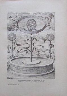 Horoscopium botanicum die Sonnenblume als Uhr - Originaldruck aus ca 1906