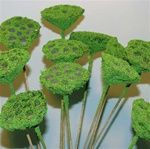 Younger and Son Wholesale  Lotus Pod Moss Coat Stem