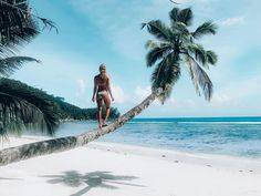 The amazing beauty of the Seychelles Islands is perfect for every picture. Seychelles Islands, California Beach, Bikini Pictures, Bikini Beach, Walk On, Palm Trees, Photo Credit, Amazing, Travel Photography