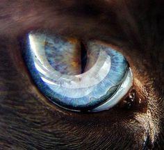 ojo+de+gato.JPG (320×293)