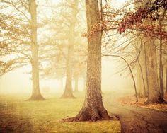迷失在夢幻般的森林中 - Joy St.claire 攝影作品 - ㄇㄞˋ點子靈感創意誌