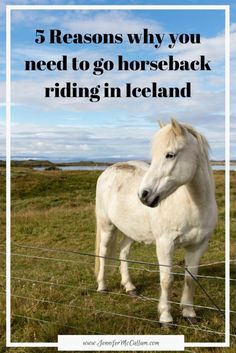 Everyone should experience Iceland by horseback