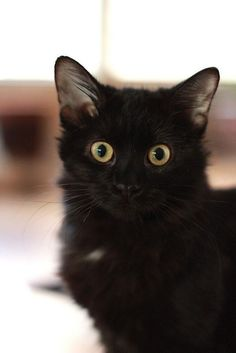 Aww. I love black cats. It makes me mad when people say that they are bad luck, cuz they aren't